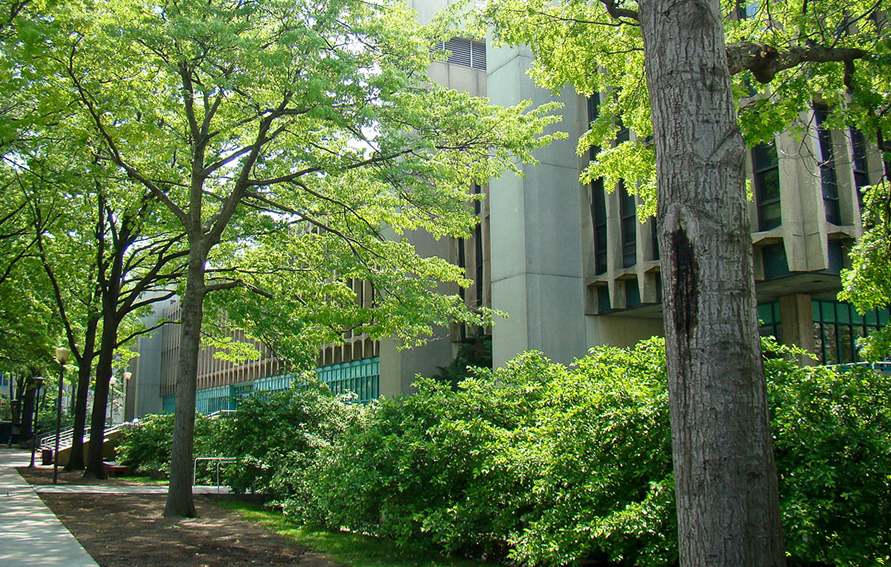 Lehman College trees