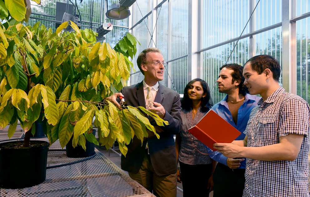 Dr. Edward Kennelly is a Professor in the Department of Biological Sciences, School of Natural and Social Sciences, Lehman College. He has received a Fulbright Fellowship. He is pictured here in the Lehman College greenhouse with some of his students. They are (from l): Harini Anandhi Senthilkumar and Adam Negrin, both doctoral students in plant sciences and Shi-Biao Wu, a post-doctoral student. They are sampling a cacao plant and taking notes.