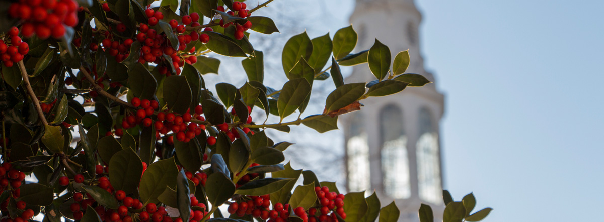 Winter holly growing on the Brooklyn College campus: Winter Holly, December 2013 Student Photo Challenge winner